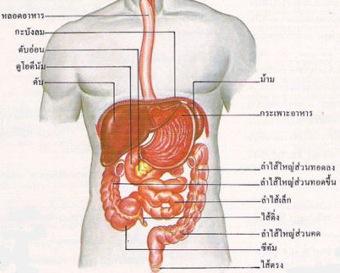 intestine, ลำไส้, ท้องผูก, อาหารไม่ย่อย, ท้องอืด, กรดไหลย้อน, แก๊สเยอะ, เรอบ่อย, ผายลมบ่อย